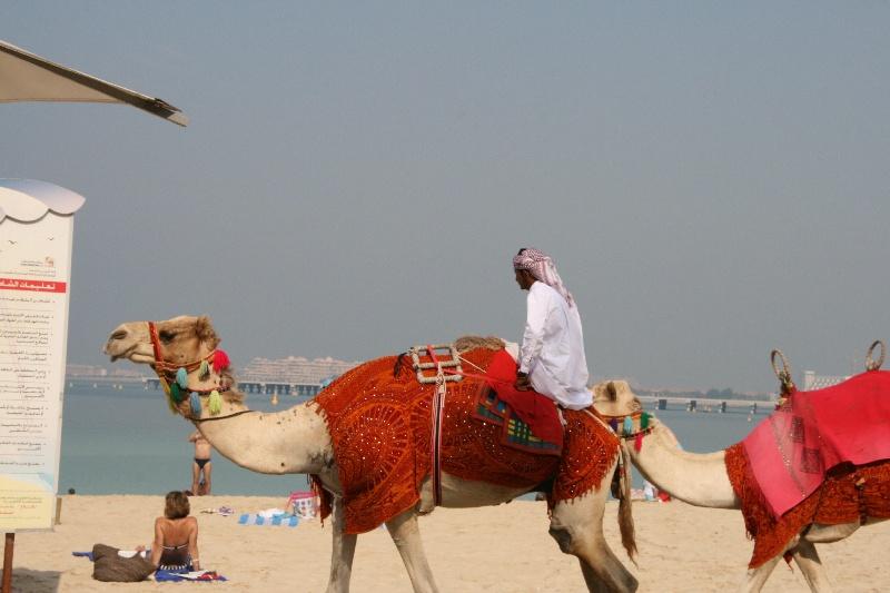 https://www.hamm-family.de/Forenbilder/Dubai2013/IMG_5872.JPG