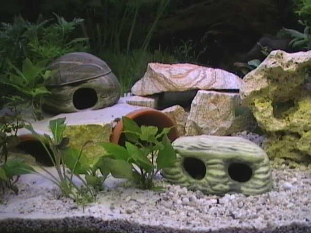 terasse bauen aquarium forum. Black Bedroom Furniture Sets. Home Design Ideas